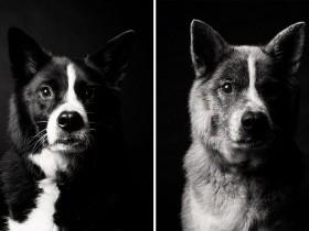 让人感动的照片:时间都去哪里了 狗狗竟然老了