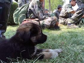 """外媒报道天津爆炸被士兵救出的小狗 取名为""""生化"""""""