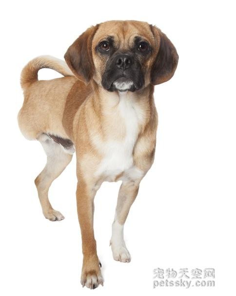 如果你的宠物有残疾,你还会爱它如初吗?
