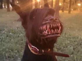 """""""狼人口罩""""让你的狗狗更有威慑力 自己更有安全感"""