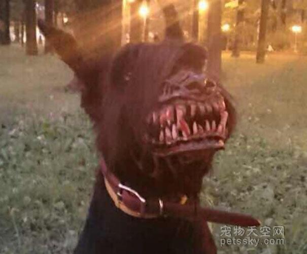 为什么要给狗带嘴套?狗狗带嘴套会不会很难受?