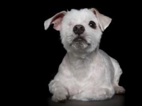 25张让人内心强大的照片:摄影师镜头下残疾动物