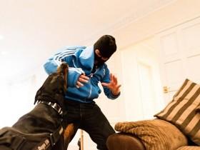 英国两个小伙将狗训练成保镖犬卖 每只20万元左右