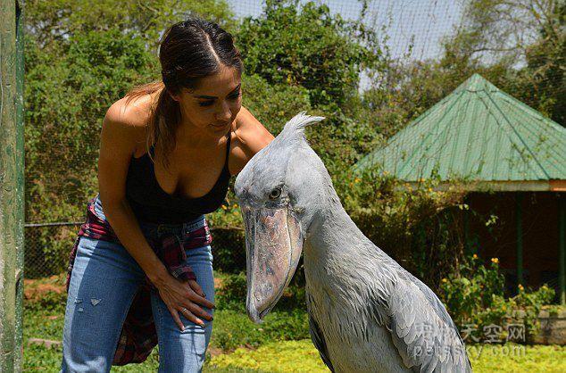 美女跳艳舞救野生动物