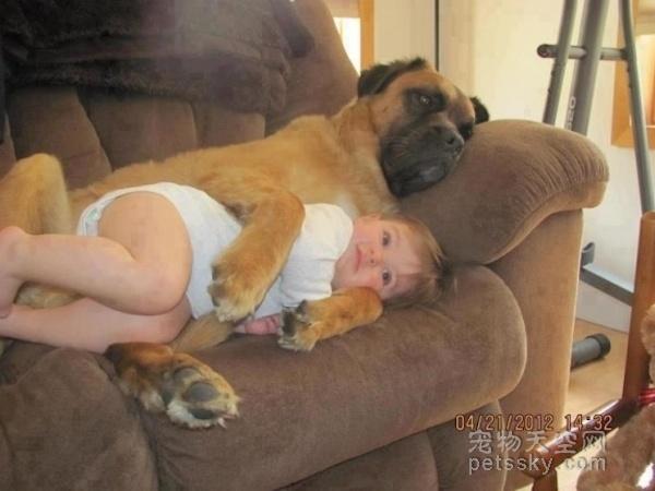 为什么有了孩子还养狗 这些照片来告诉你原因