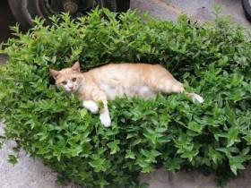 千万别惹猫咪 尤其是在它们心情不好的时候
