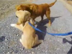 狗狗从小离开妈妈 四个月后母子相见的画面