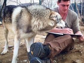 男子与狼在一起的照片 把保护狼当成了自己的事业