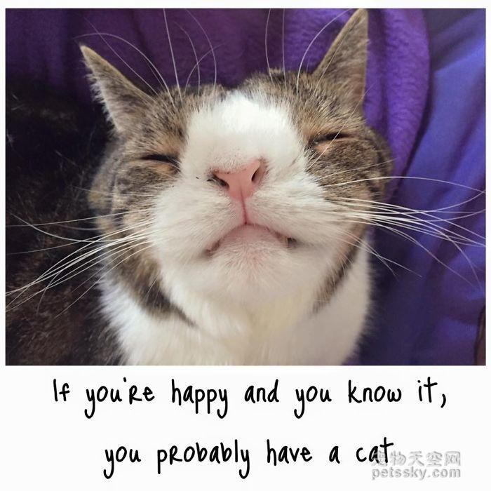 猫咪Monty