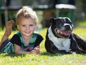 恐水的狗狗发现小主人溺水 跳水救人失败后跑回家求救