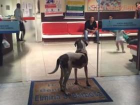 狗狗在医院门口等了八天 了解真相后让人很感动
