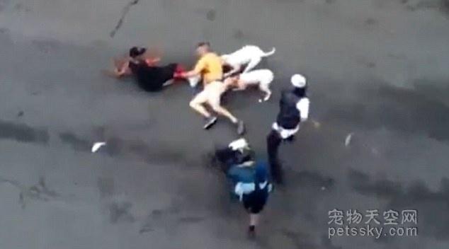 重庆4岁男孩被一条比特犬撕咬, 涉事宠物店被罚500元