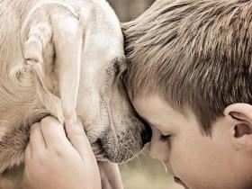 领养了一只狗狗 它和我的儿子成了形影不离的好朋友