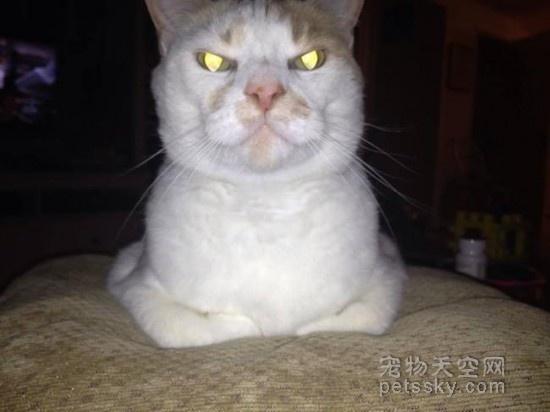 家中宠物如果生气了,会做出什么举动?