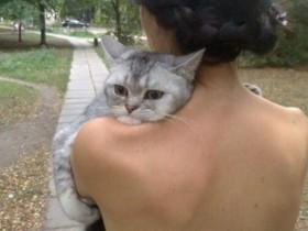 养猫的13个痛苦之处 铲屎官们肯定感同身受
