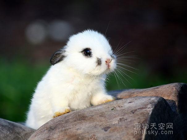 属兔2019年运势及运程 属兔人2019年全年运势