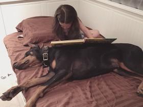 怎么训练杜宾犬?杜宾犬的扑咬训练