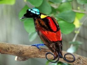 大千世界无奇不有 这些鸟可能你都没见过