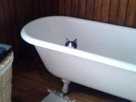 自从养了猫 洗澡的时候总是被无耻地窥视