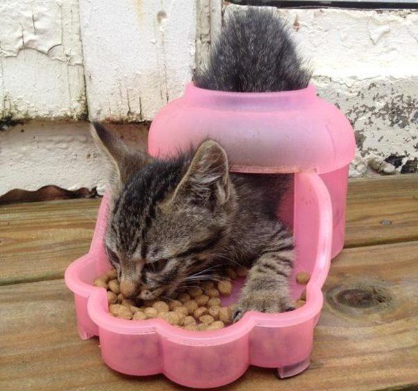海螺 不能吃_猫粮和我们人类的食物(猫饭)有啥区别呢?