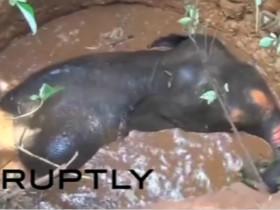 为了救一只落井的小象 这群印度人把井给挖开了