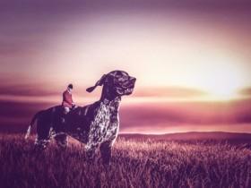摄影师给流浪狗狗拍的艺术照 有一种绚丽的感觉