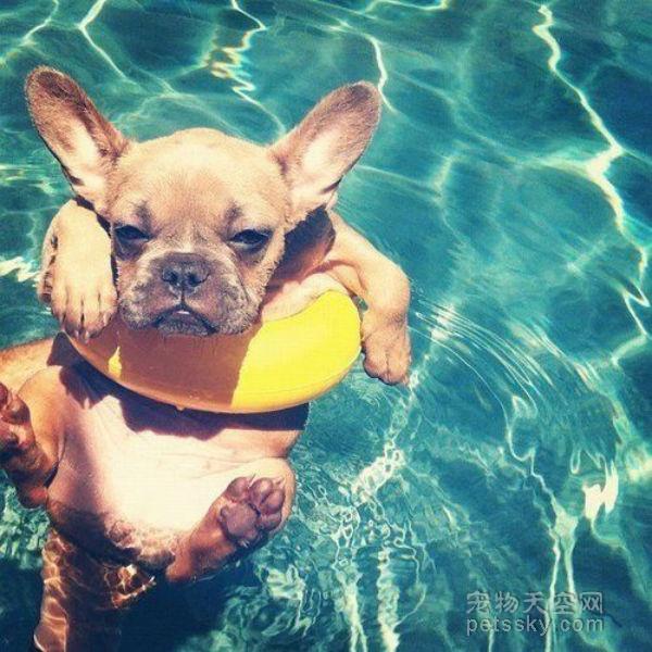 带宠物去游泳一次要花260元,你认为这个钱花的有必要吗?