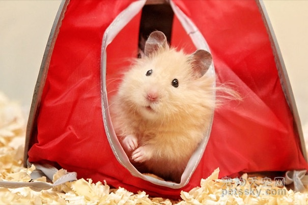 在夏天,如何为仓鼠选择垫料?仓鼠垫料有哪几种?