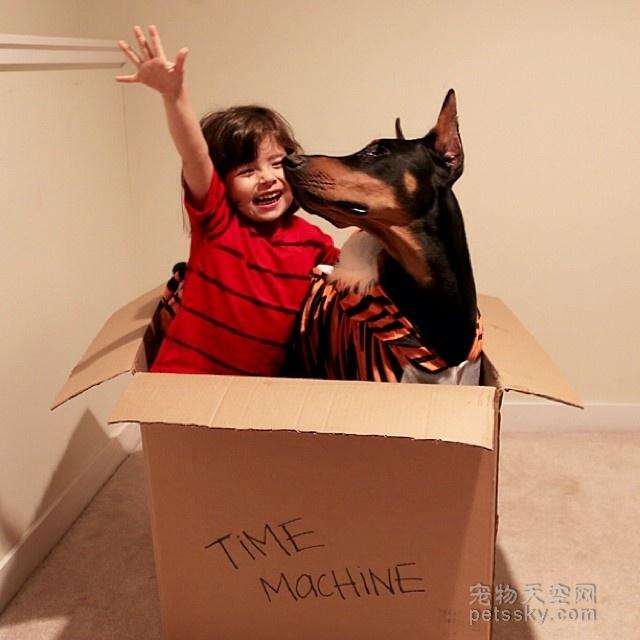 常见遗传病_杜宾犬的几种常见疾病