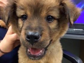 """小狗被两少年""""绑架""""后 警察成功将其救出并收养"""