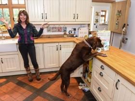 英国宠物狗频繁捣乱厨房 逼主人花高价改造