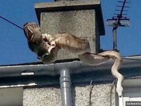蟒蛇在空中电线上面爬行 把过路的行人吓坏了