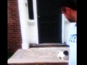 高智商的小狗害怕下台阶 做了让所有人都想不到的事情