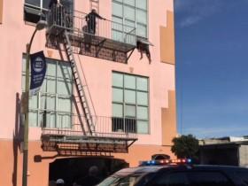 美国一小偷被警察追得要跳楼 家人只好把宠物猫送来