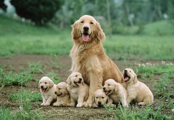 狗狗在怀孕期间,有什么不能吃的食物吗?