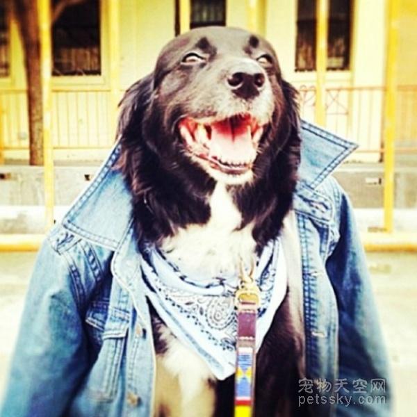 为什么很多人热衷养一条宠物狗?还把它们当成人对待