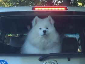 车主独留狗在车里 留条告诫勿破窗救狗:它在听歌呢