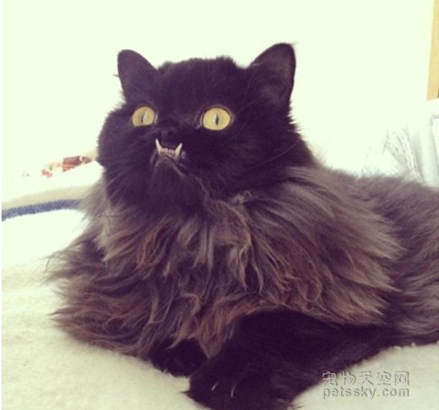猫奴们分享的20张照片