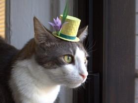 21张戴小帽子的猫咪照片 不知猫奴们是否感兴趣