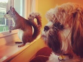 被飓风毁掉家的小松鼠 因祸得福成为网络名宠