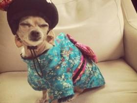 狗狗的时装秀 时尚时尚最时尚