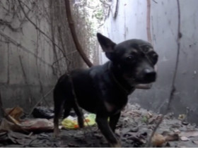 动保人士分享救助流浪狗的视频 传递正能量