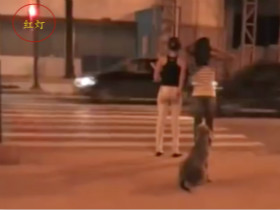 """狗在等绿灯时两位美女闯红灯 网友叹""""人不如狗"""""""