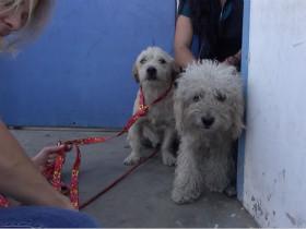 动保组织救助两只流浪狗的视频 音乐非常好听