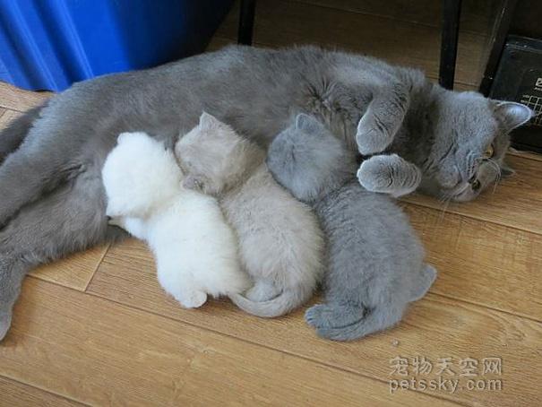 当妈妈是一件多么不容易的事情