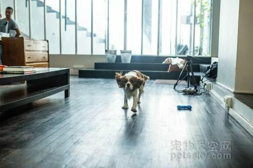 如果办公室可以养宠物,你会是什么心情?