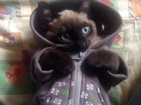 """21张猫咪提醒大家""""冬天来了""""的照片 一定要注意保暖"""