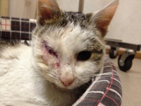 猫咪失去了一只眼睛 命运却发生了质的转变