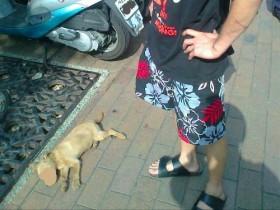 """台湾男子徒手虐死幼犬 称""""我教训它不关别人的事!"""""""
