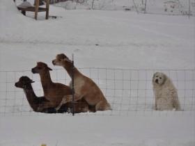 网上28张有趣的照片和动图 宠物竟然可以如此搞笑
